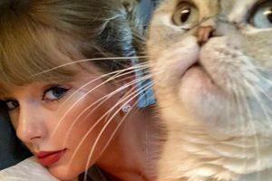 テイラー・スウィフトと、愛猫オリヴィア